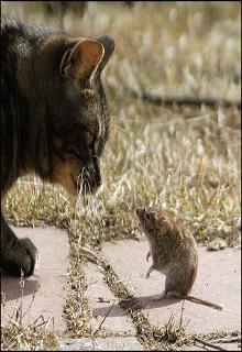"""Книга """"Мышко-кошки... Кошко-мышки..."""" читать онлайн"""