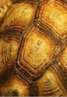 """Книга """"Исповедь Черепахи"""" читать онлайн"""