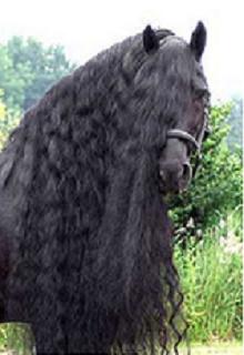 """Книга """"Влюбился в лошадь"""" читать онлайн"""