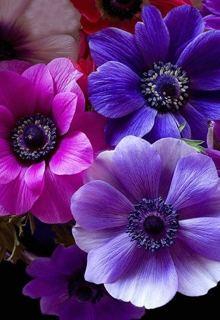 """Книга """"Фиолетовые цветы"""" читать онлайн"""