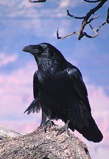 """Книга """"Басня. Ворона и Шлюха"""" читать онлайн"""