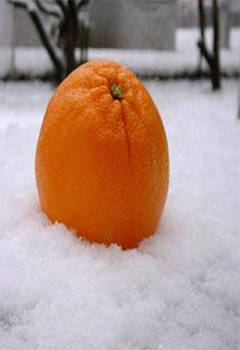 """Книга """"Апельсины"""" читать онлайн"""