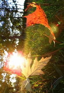 "Книга ""Осенний цикл сентября"" читать онлайн"