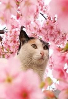 """Книга. """"Коты, цветы и вся Вселенная. Сборник хокку """" читать онлайн"""