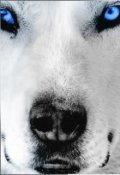 "Обложка книги ""Сколько волка не корми..."""